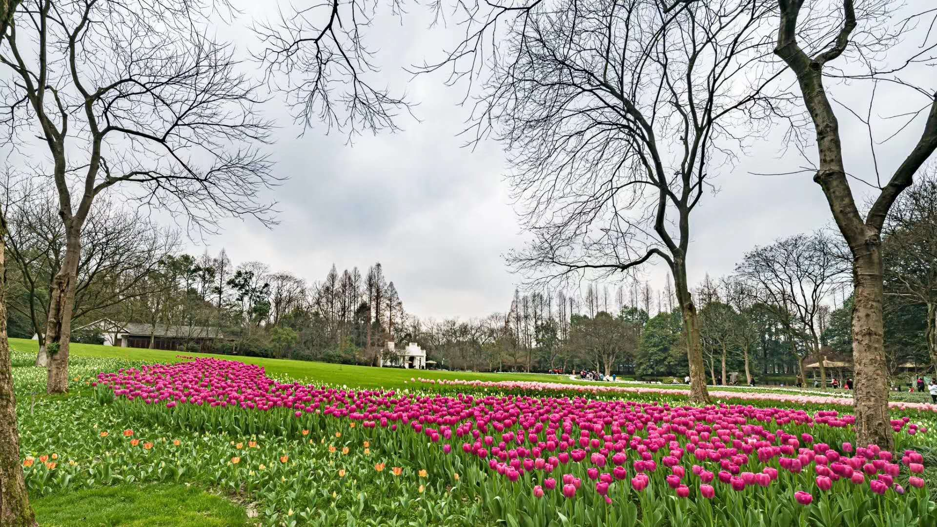 图片[3]-杭州:春日太子湾公园 预约开放-金瓦刀