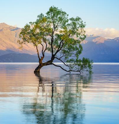 图片[1]-《瓦纳卡的孤树》照片背后的故事 壹-金瓦刀